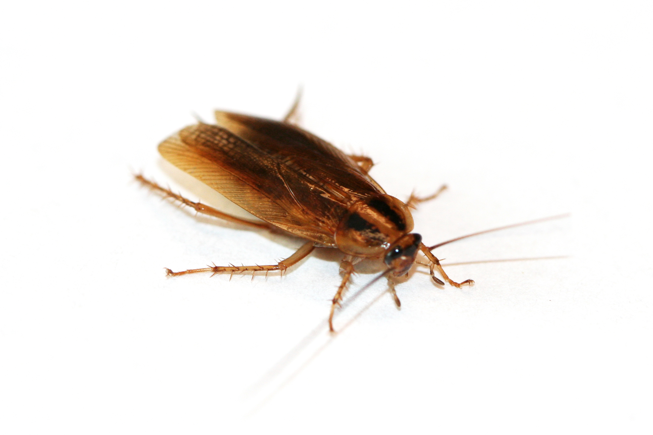 Amazoncom  Ultrasonic Pest Control Repeller 2018